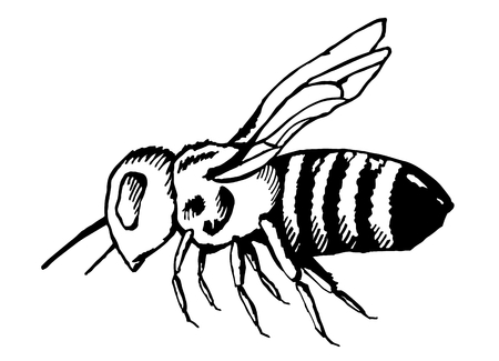 honeybee is a stinging winged insect did collects nectar and pollen