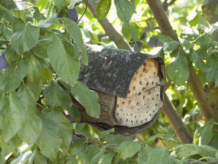 handmade hive in a tree