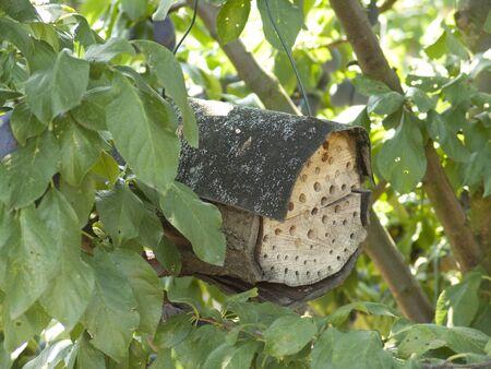 handmade hive in a tree 版權商用圖片 - 60821593