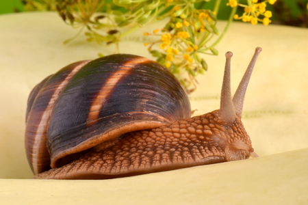 clam gardens: Portrait of a snail on a background of plants