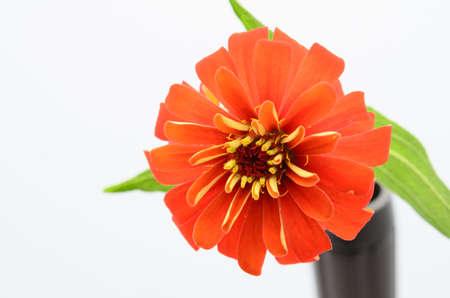 sear: sear flower,shallow focus Stock Photo