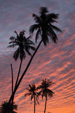 silhouette coconut trees with tawilight sky