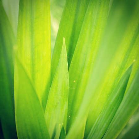 Green leaves wallpaper Banco de Imagens