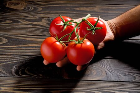Tomato harvest. Farmers hands with freshly harvested tomatoes. Mans hands holding fresh tomatoes on wooden cutting board. Archivio Fotografico