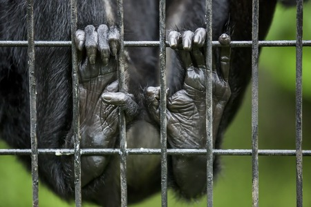 Monkey finger in the cage. Paw of monkey holding cage at zoo