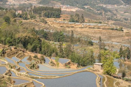 Rice terraces of Yuanyang, Yunnan, China photo