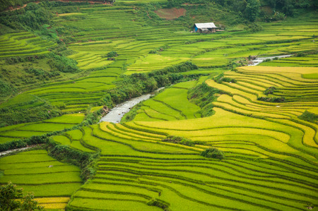 Reisfelder auf Terrassen Standard-Bild