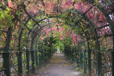 petrodvorets: Natural Tunnel created with flowers and branches at petrodvorets,moscow Stock Photo