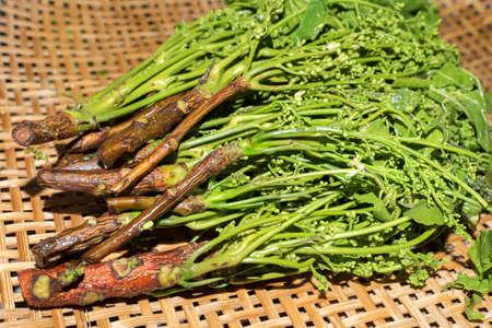 quinine: Siamese neem tree, Nim, Margosa, Quinine (Azadirachta indica A. Juss. Var. Siamensis Valeton) on basket