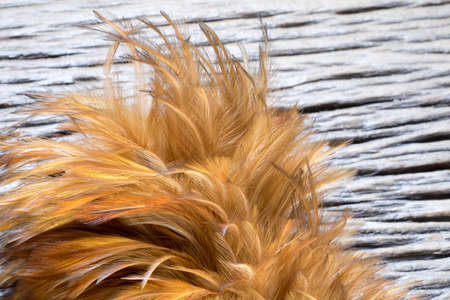 broom handle: Close up Feather duster detail on wood background