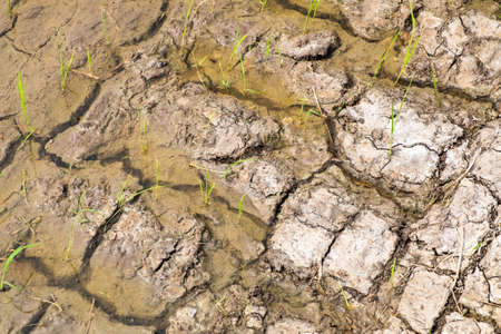 dry land: Cracked dry land with water