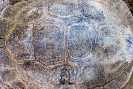 carapace: Texture of Turtle carapace.