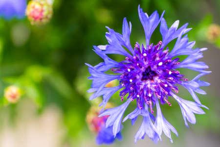 tender: Macro Floral soft tender background