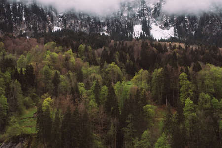 Beboste berghelling in laagliggende wolk met de groenblijvende