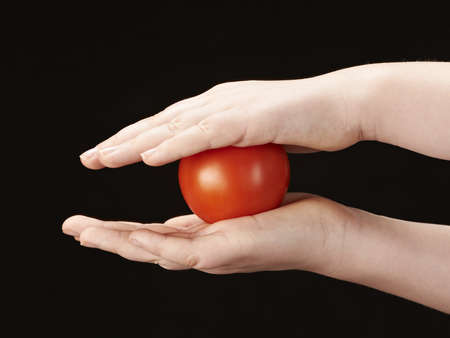 Tomatoe sandwiched between childs hands