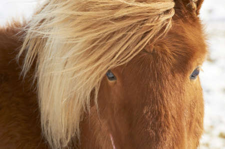 Closeup of brown horse Stock Photo - 14895239