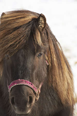 Closeup of dark brown horse Stock Photo - 14895235