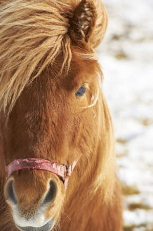 Closeup of brown horse photo