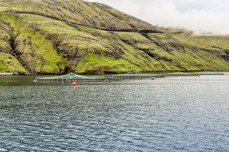 Salmon farming photo