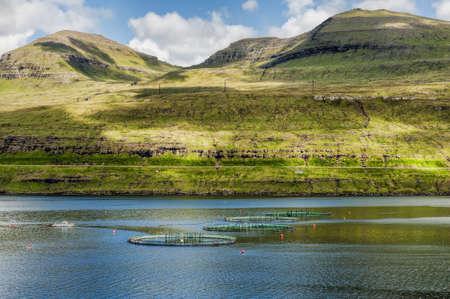 Lachszucht auf den Färöer-Inseln Standard-Bild - 21612581