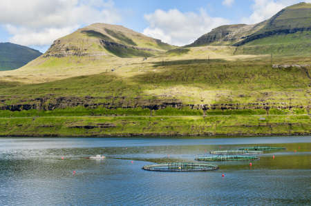 Lachsfarmen in den Färöer-Inseln Standard-Bild - 21612582