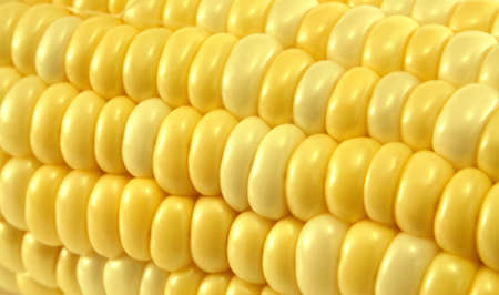 Close up macro of yellow corn or maize for use as textured background with copyspace