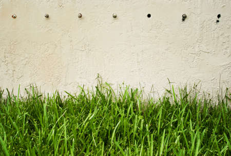 white washed: Lush green grass against white washed old wall background with copy space
