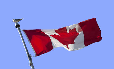 Red and white Canadian flag with gull bird isolated against clear blue sky with copy space