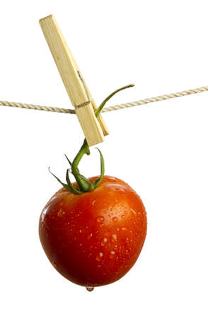 Ripe red tomato hanging and drying from a clothesline isolated on white background.