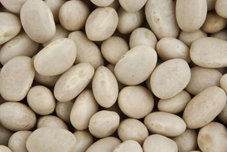 yankee: Close up of dry white oval navy beans.