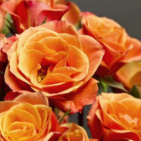Beautiful bouquet of soft orange and yellow colored roses against gray backdrop.