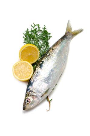 pacific herring Stock Photo - 13279471