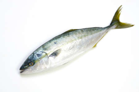 yellowtail Stock Photo