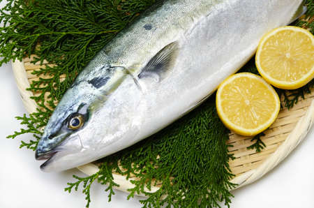 yellowtail Stock Photo - 13279934