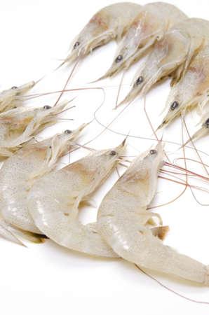 shiba shrimp photo