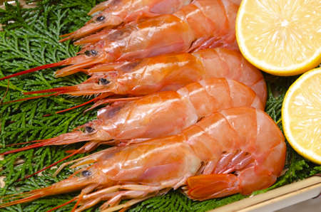 argentine red shrimp Stock Photo