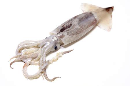 neon fish: japanese common squid
