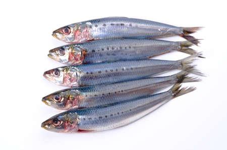 sardina Foto de archivo - 13279647