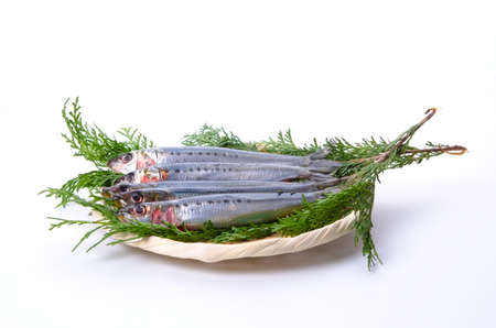 sardine Stock Photo - 13279517