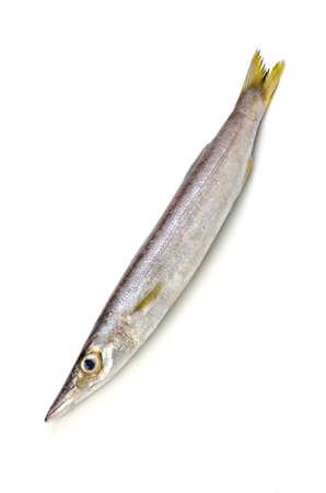 barracuda:  Red barracuda