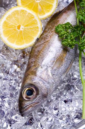 gnomefish photo
