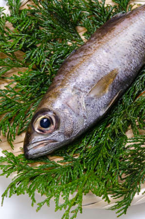 bluefish: gnomefish Stock Photo