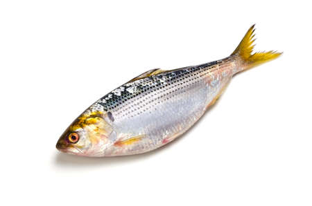 thread shad Stock Photo