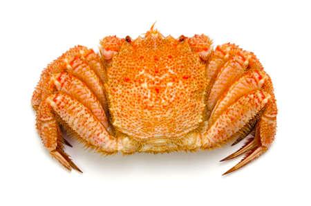 crustacea: horsehair crab