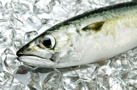 mackerel Stock Photo - 13279787