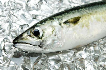 mackerel Stock Photo - 13279787