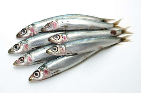 pacific round herring