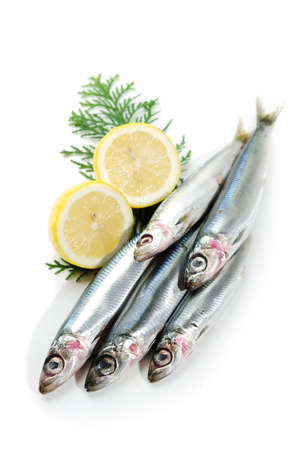 pacific round herring photo