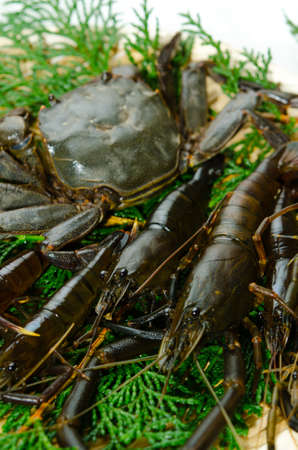freshwater prawn and mitten crab Stock Photo - 13279805