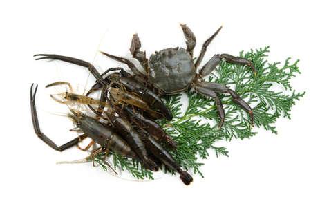 freshwater prawn and mitten crab photo